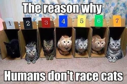Funny Reason Humans Don't Race Cats Meme Joke Picture