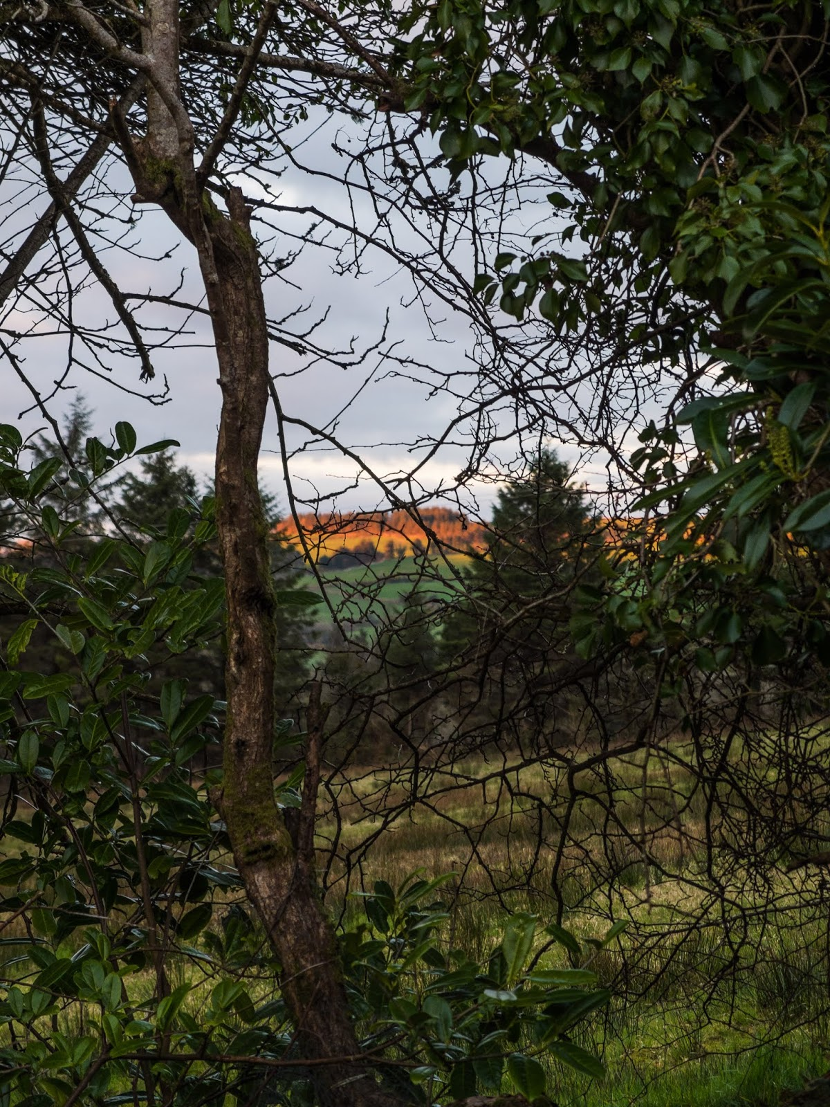 Sun setting on distant mountain tops through a tree hedge.