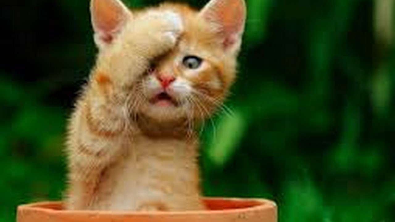 katzenbilder kostenlos