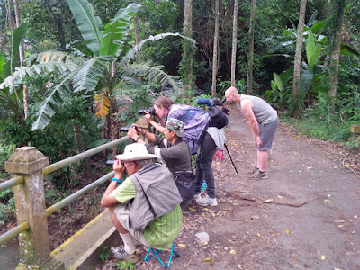The target was Javan and Blue-eared Kingfisher at buffering zone of West Bali National Park