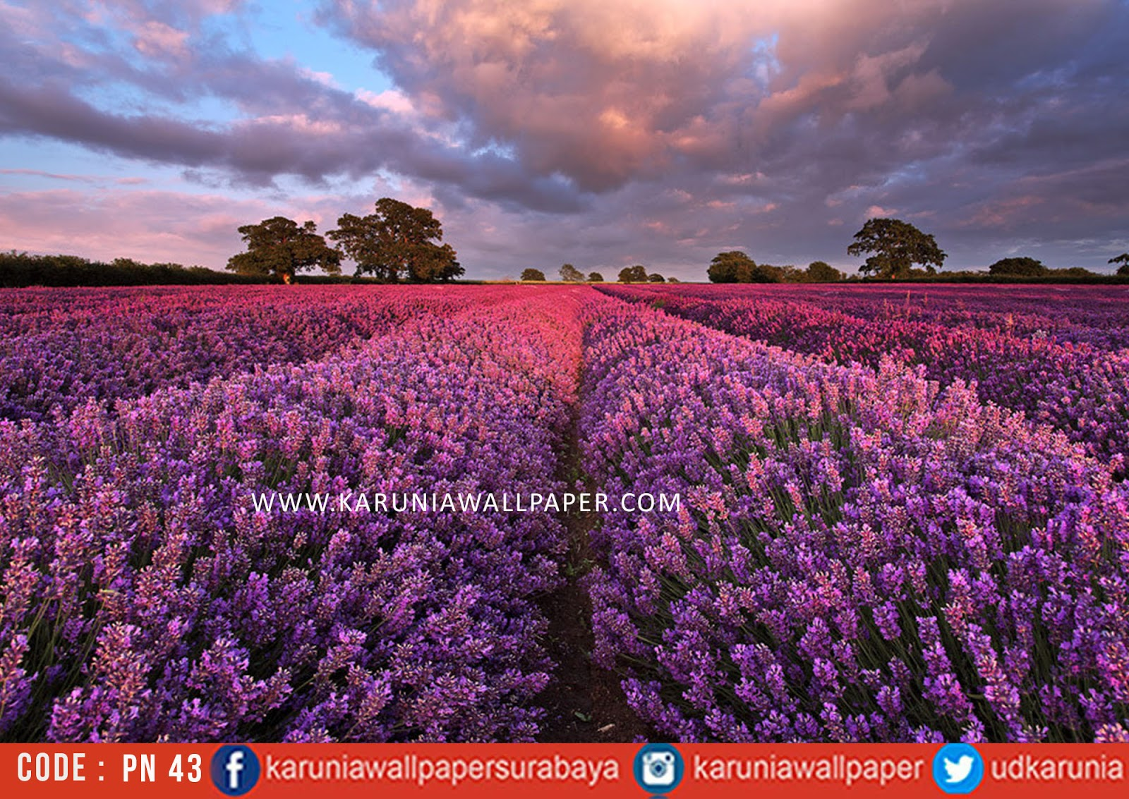 jual photowall lavender