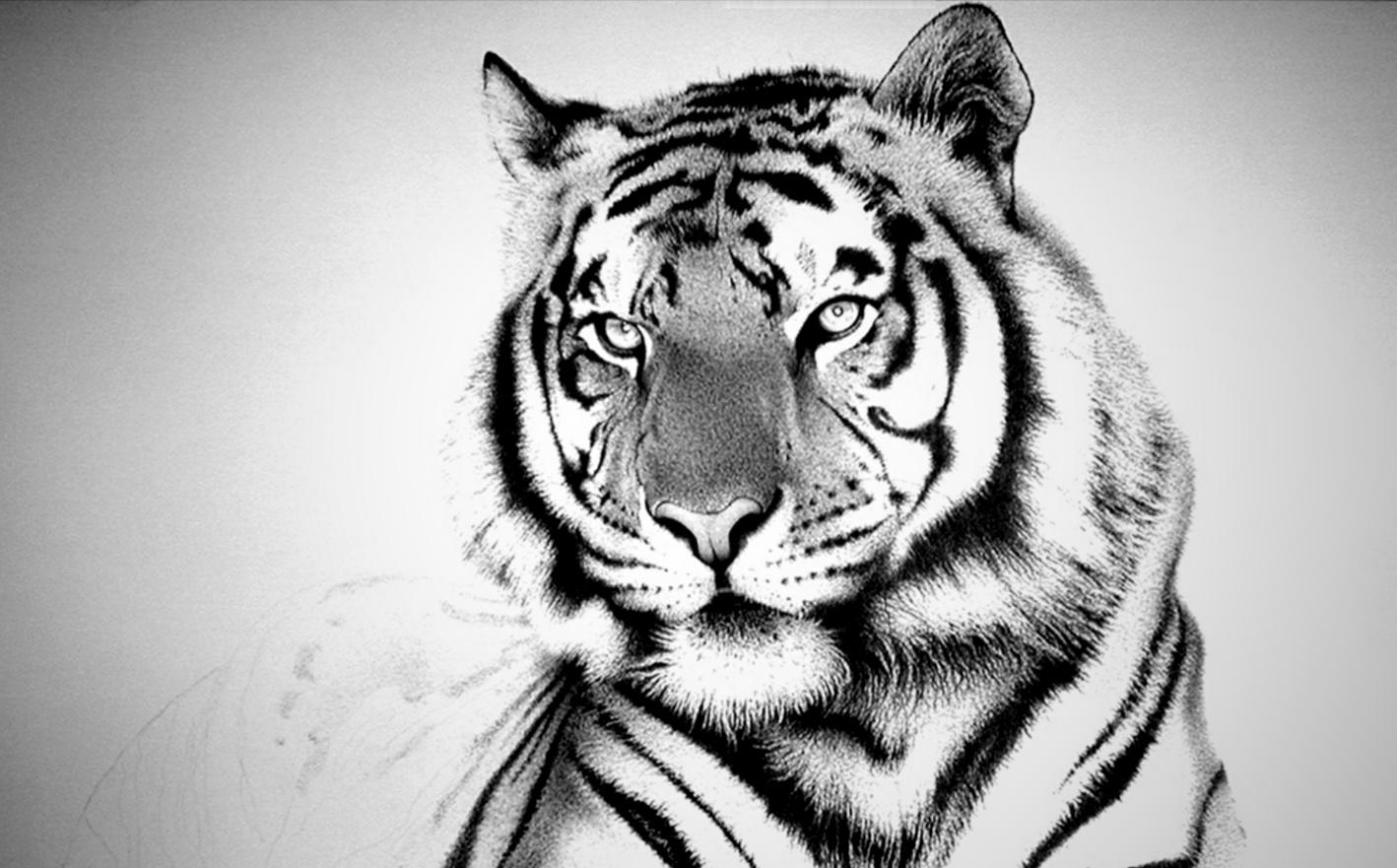 Gambar Harimau Putih Kartun