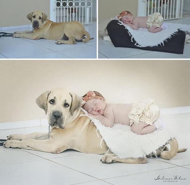 Chỉ với vài thủ thuật nho nhỏ, bé đã ngủ ngon trên lưng chú cún nhà bạn