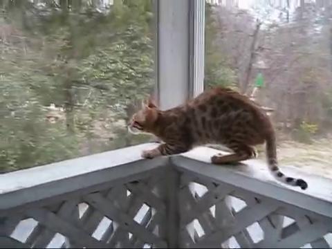 Fip Katze Lebenserwartung