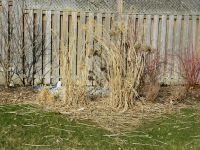 North York Toronto spring garden clean up before by Paul Jung Gardening Services