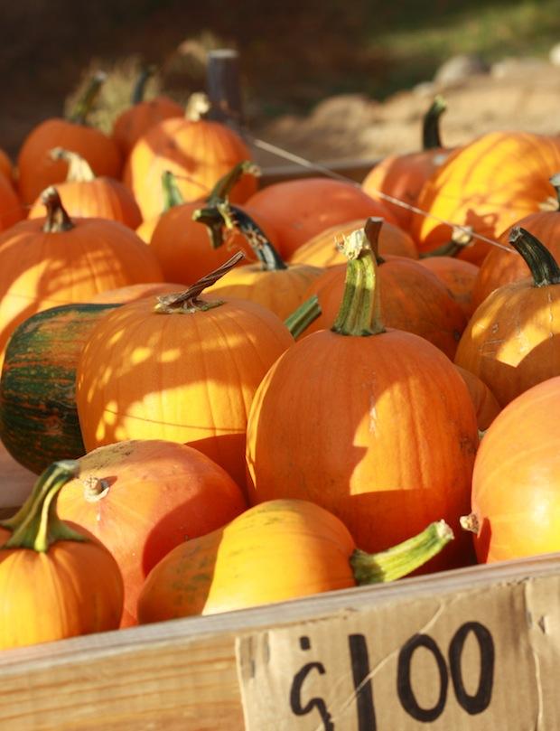 Pumpkin wagon in Minnesota