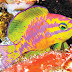 Hallan nueva especie de pez neón en Brasil