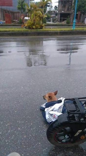 Cô bé nhường áo khoác che mưa cho chú cún bị xe đâm trên đường
