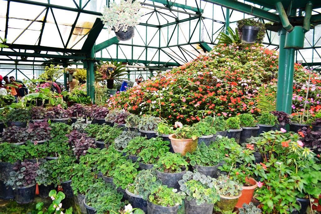 Ooty botanical gardens tamil nadu i crave history