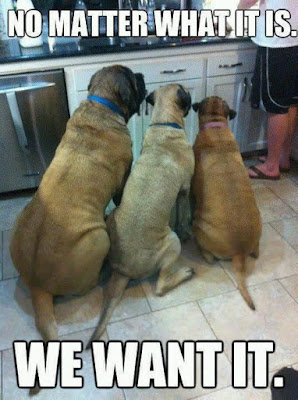 Dog Humor ; No Matter what it is...