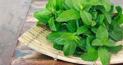11-amazing-ways-mint-or-pudina-keeps-you-healthy