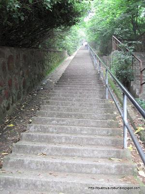 Escalones hasta la cima del cerro  Sanmaofeng Mountain