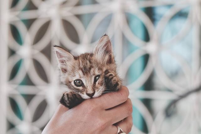 Co zrobić, jeśli kociak potrzebuje pomocy ?
