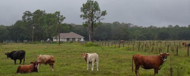 Casas y fincas con ganado