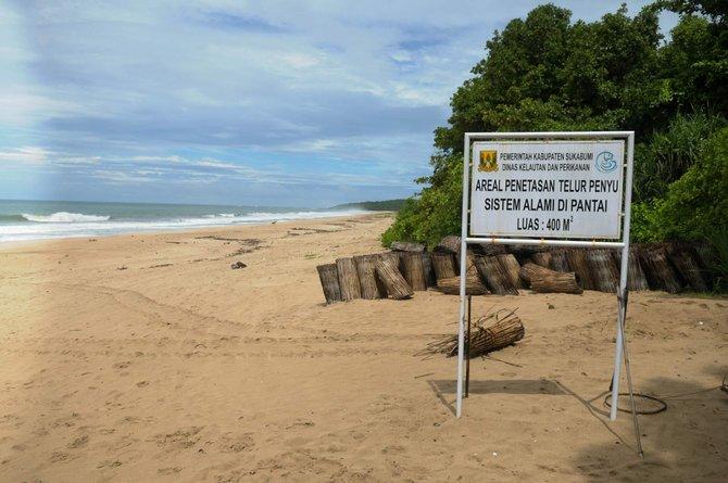 Penangkaran Penyu di Pantai Ujung Genteng