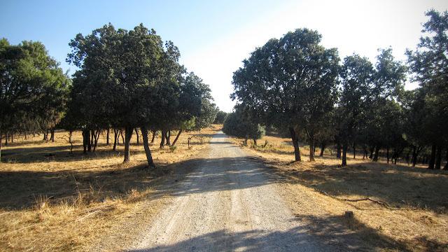 Dehesa de Moncalvillo