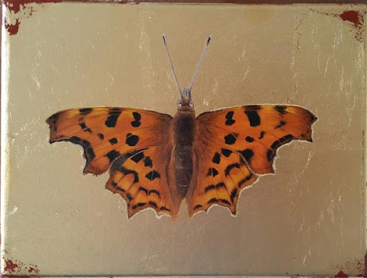"Something Different 'Comma' 6"" x 8"" oil & 24 carat gold leaf on canvas"