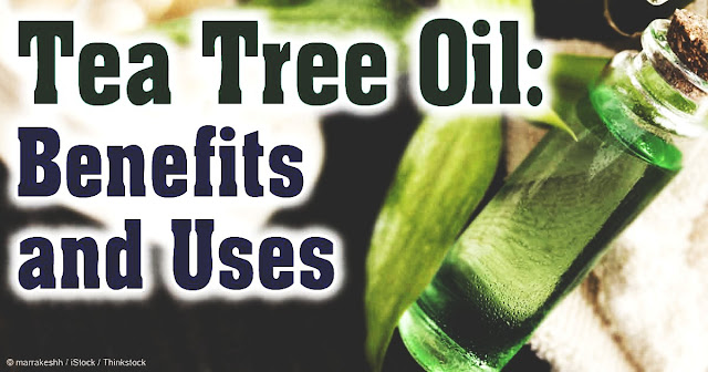 29 Life hacks, Uses and Benefits of Tea tree Oil YOU NEED TO KNOW