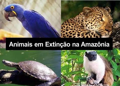 Salve A Amazônia Animais Em Extinção Floresta Amazônica
