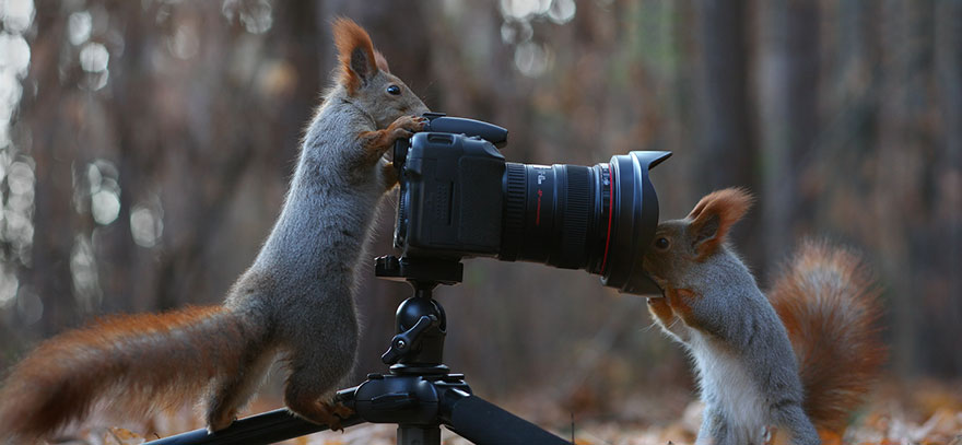 Russian Photographer Captures The Cutest Squirrel Photo