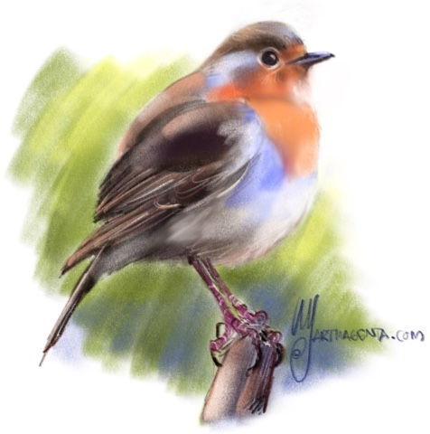 Robin birddrawing by Artmagenta