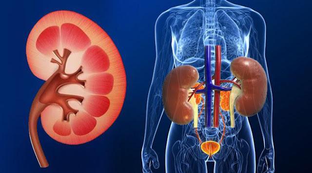 Diagnosa Gangguan Fungsi Ginjal Akut Diagnosa 1. Menentukan GFR atau klearans inulin diukur dengan test bersihan inulin  GFR = Urine x V pada pria dewasa lebih kurang 120 ml/menit/1,73 m2  pada wanita dewasa 10-15 % lebih rendah dibandingkan pria.  2. Test klearens kreatinin  Untuk menghitung klearens kreatinin secara kasar dapat digunakan rumus Cockroff dan Gault.  Klearens kreatinin = (140-umur) x berat badan / 72 x kadar serum kreatinin  Untuk menetapkan diagnosa dapat dilakukan beberapa tindakan diantarnya adalah mengetahui tentang riwayat penyakit. Penampakan fisik seperti pH, kimia darah dan urine mutlak diperlukan, demikian juga dengan eksresi Na, kemampuan pemkatan urine, protein dalam darah dan urine. Ekresi protein normal dalam urin sehari biasanya kurang dari 150 mg/ hari dan jika lebih besar dari 3 gram/ hari diduga ada gangguan pada glomerolus. Pada skema tersebut diperlihatkan analisis gangguan fungsi ginjal akut. Fase gangguan fungsi ginjal akut dapat dibagi atas 4 bagian antara lain
