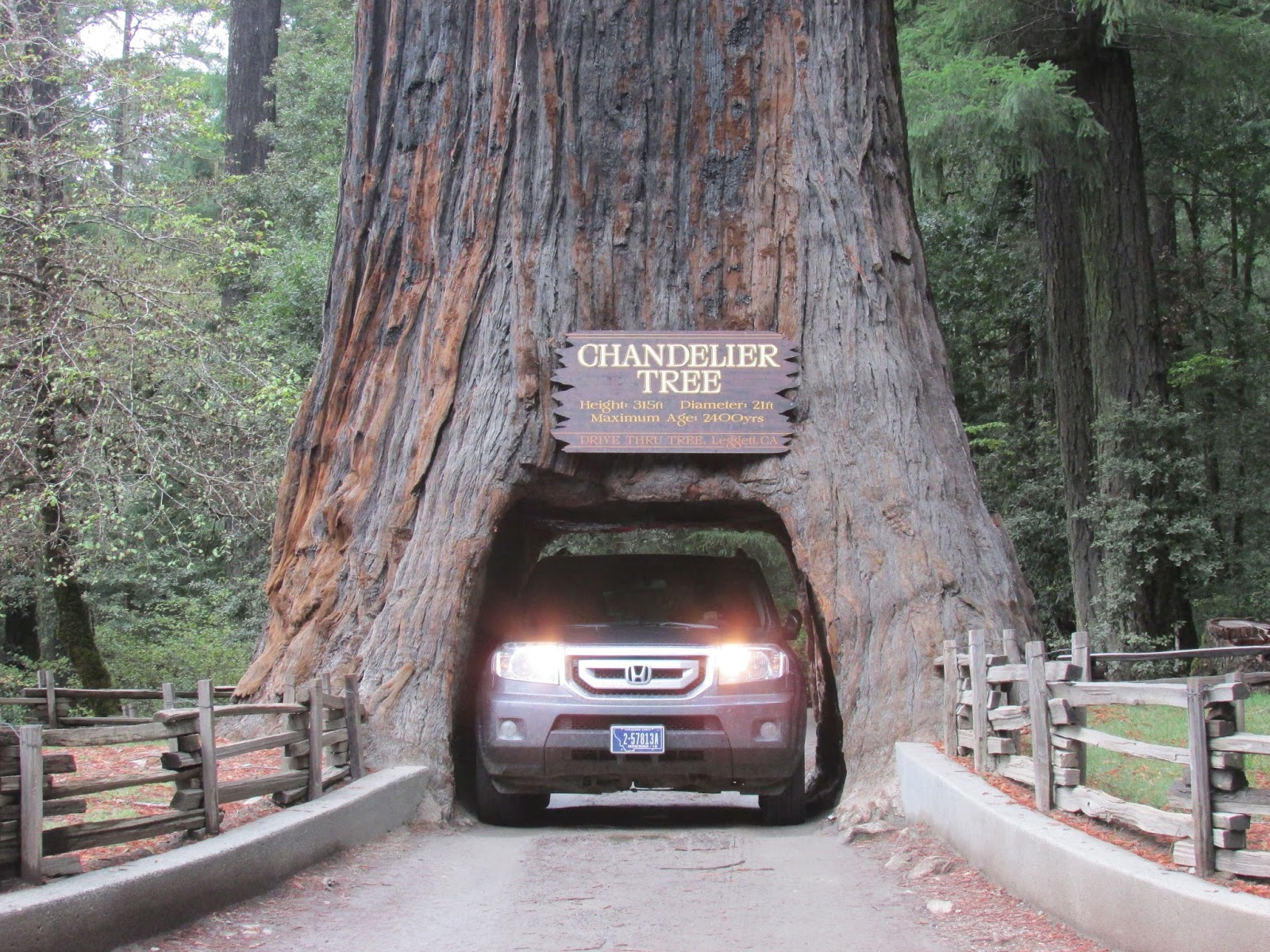 The golden hours october 2014 here is iain driving our car through the chandelier tree the children rode with him through the tree while i took a picture notice i have been relieved of arubaitofo Images