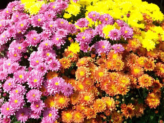MixingItUp Forget buying Mums every year,  Use the perennial Sedum - Mums Image