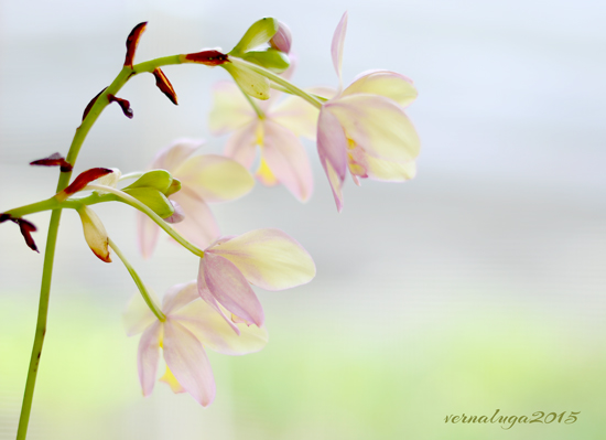 Calm Environment, Floral Photography by Verna Luga