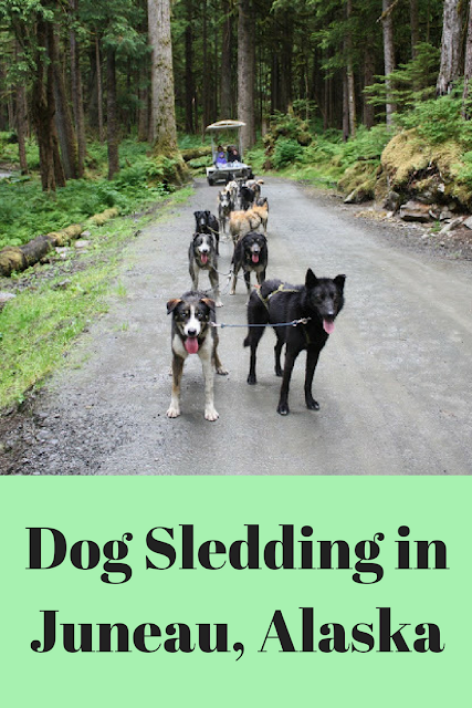 Dog Sledding in Juneau, Alaska