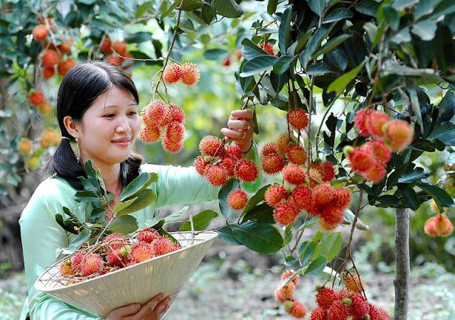 Vietnam And Fruit Kingdoms 2