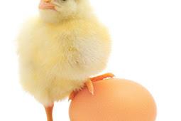 Lebih dahulu mana, Telur atau Ayam?