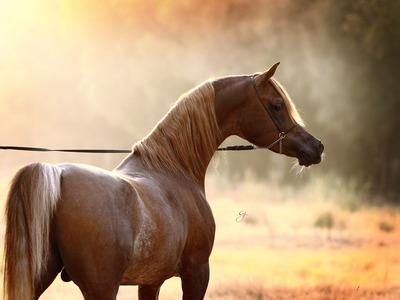 صور خيول جميلة أحلي صور