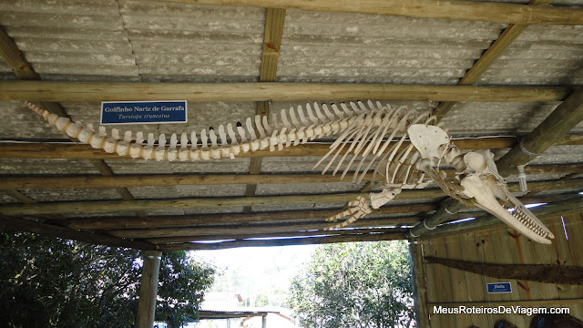 Esqueleto de golfinho nariz de garrafa - Projeto Tamar