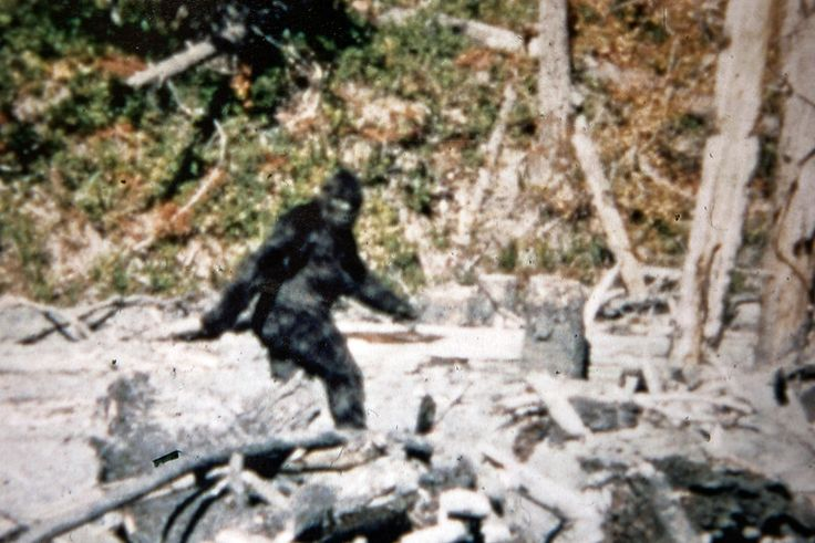 Project mayhem proof that bigfoot is real by hilary wagner for Patterson woods