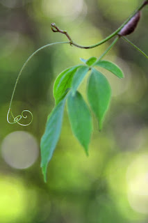 Jungle Leaves and Tendrils