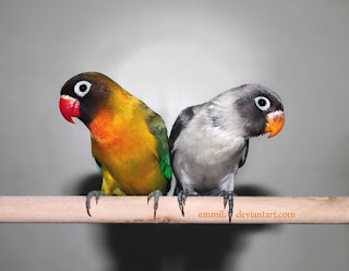 Burung Lovebird - Pemeliharaan Burung Lovebird dan Karakter Lovebird - Penangkaran Burung Lovebird