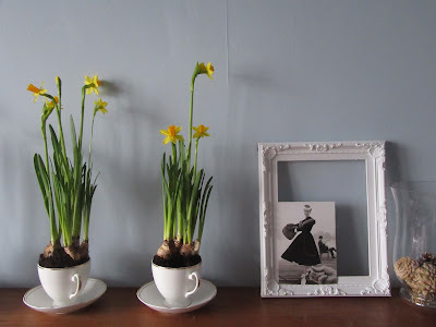mini daffs http://snadralovesblogging.blogspot.co.uk/