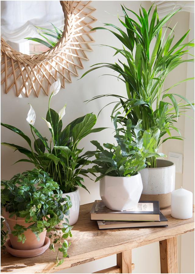 7 plantas que ayudan a subir el ánimo
