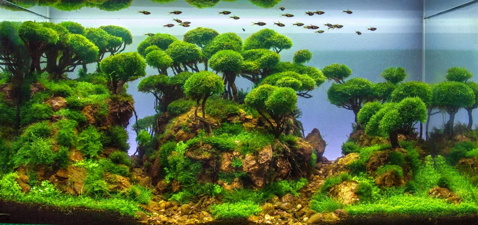 hồ thủy sinh bố cục rừng của tác giả Bernat Hosta