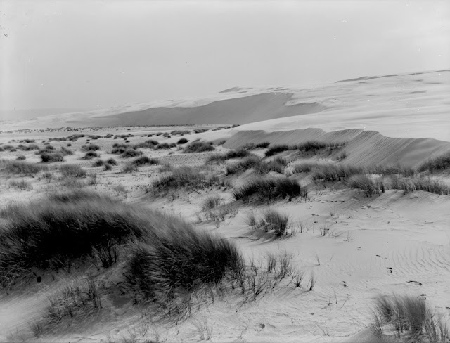 Culbin sand-hills. Morayshire. Sand-hills. Old land surface on the left is swept clear of advancing sand. The sand-drift is from right to left due to the prevailing winds, i.e. from west to east.