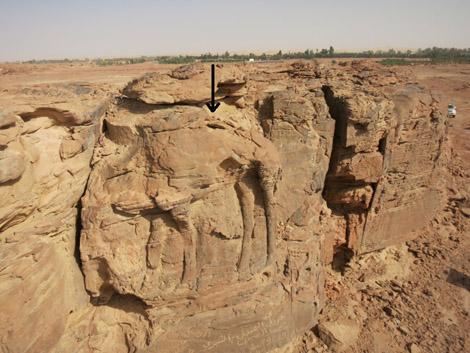 Representaciones de dromedarios en farallones rocosos en el noreste de Arabia Saudí. Foto: CNRS/MADAJ, R. Schwerdtner