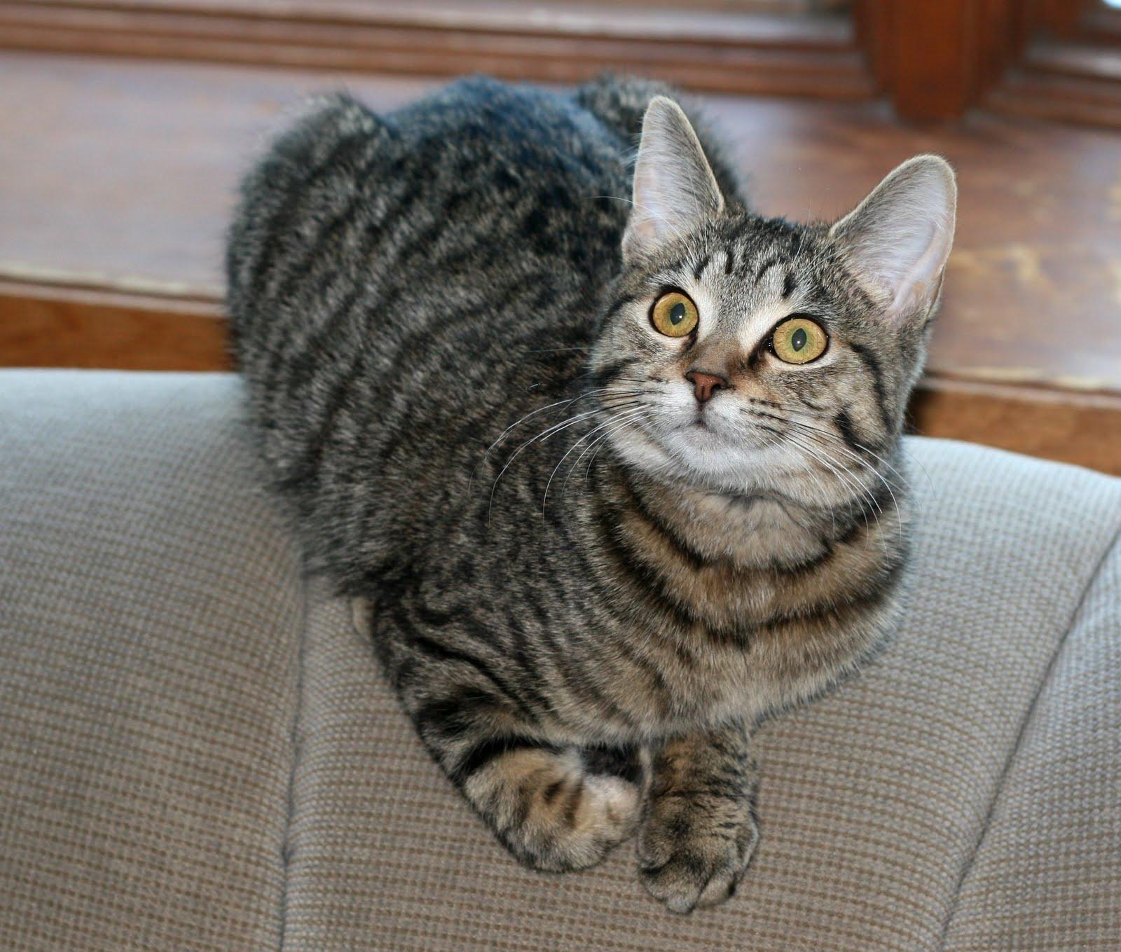 best cat shampoo for dander