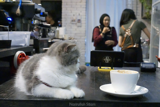 Kucing dan secangkir kopi