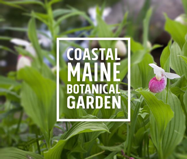 My Surprising Visit To The Coastal Maine Botanical Gardens