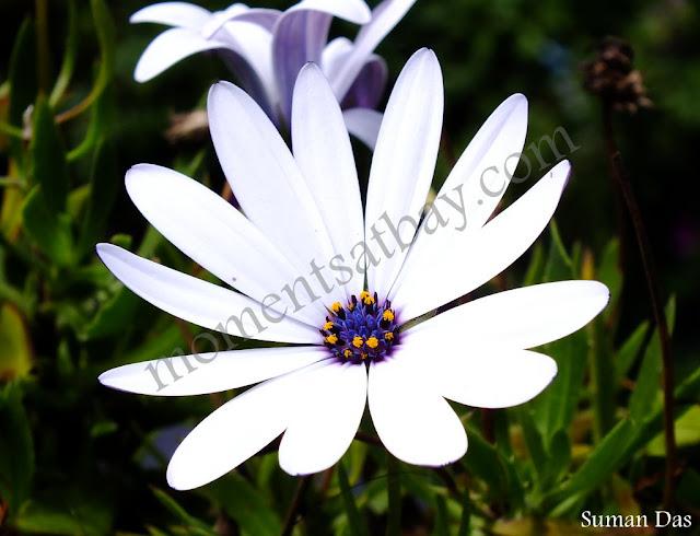 White Petals momentsatbay