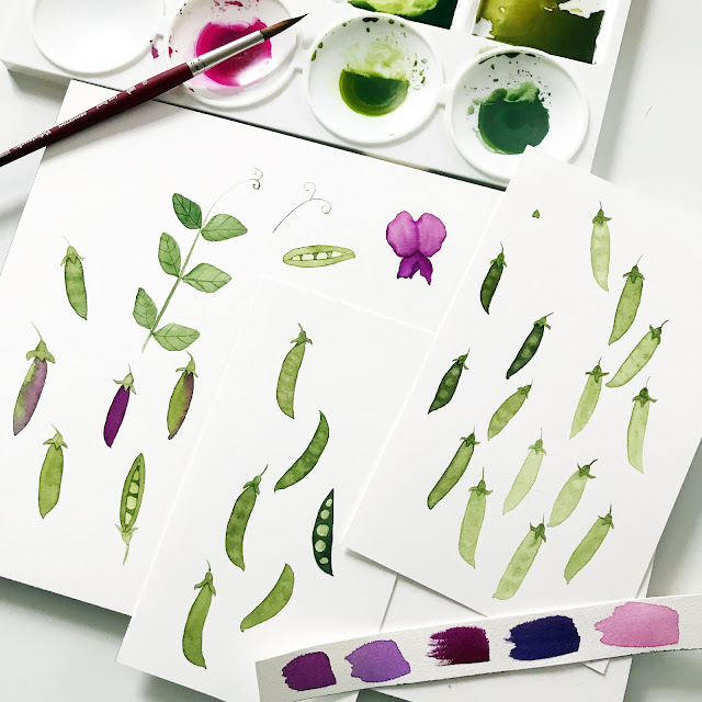 watercolor, peas, pea pods, sketching, art process, Anne Butera, My Giant Strawberry