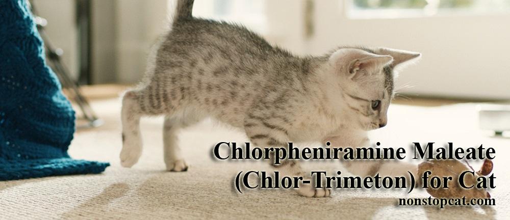Chlorpheniramine Maleate (Chlor-Trimeton) for Cat