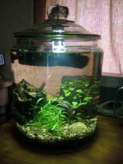 Gambar Aquarium Ikan Hias