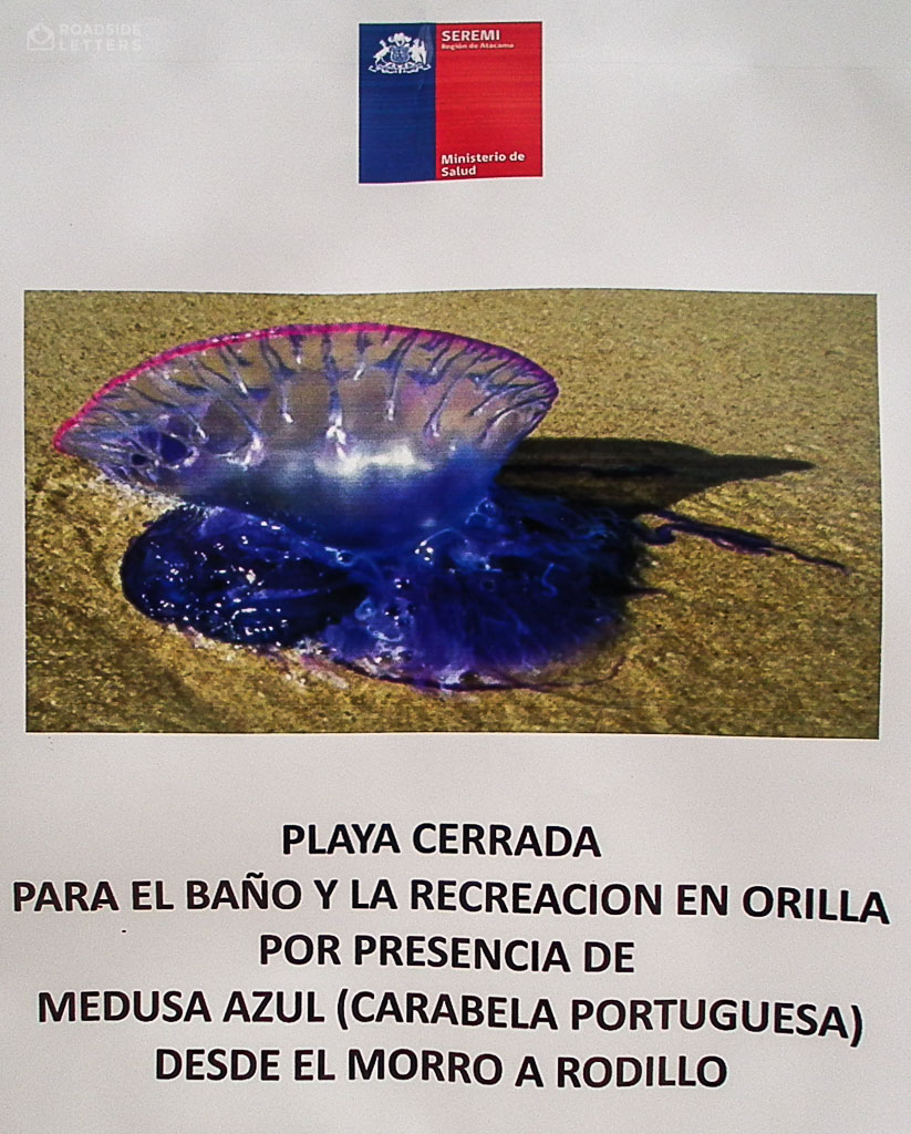 Warning about beaches being closed because of the invasion of Portuguese men o' war
